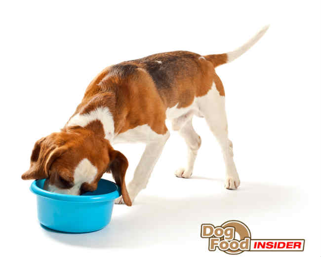 Vegetarian Diet For Dogs - Is It Ok?