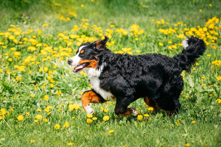 The Best Dog Supplements for Skin Health